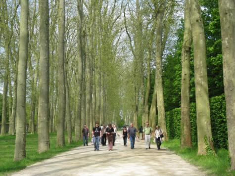 Tree lined path in the parc de versailles ile de france for Parking parc des expositions versailles